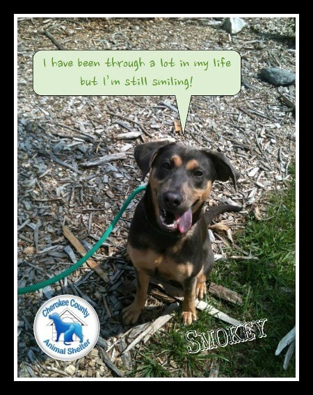 ASPCA 100K - Cherokee County Animal Shelter