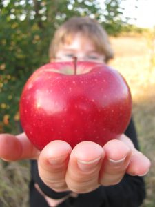 apple_picking_001