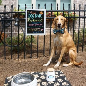 teddy the spaz man townelaker dog bar