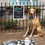 Social Media Dog  Brings Smiles to Woodstock