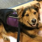 Logan therapy dog townelaker